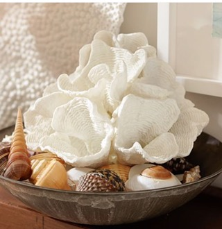 Totally Coastal Tuesday: White Wave Coral