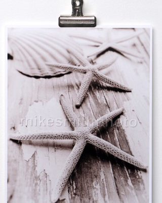 Totally Coastal Tuesday: Black and White Seashell Photography